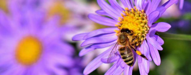 Fakta tentang Lebah Madu : Penghasil Nutrisi Berkualitas Alami dan Organik