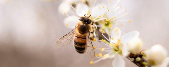 Kenalan sama Koloni Lebah Madu Yuk